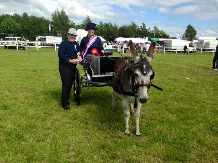 DBS - Northern Ireland Omagh Show