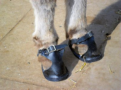 DBS - 'back to school' footwear for your donkey!