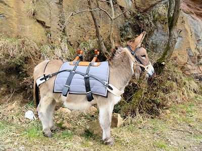 DBS - trekking gear for a donkey