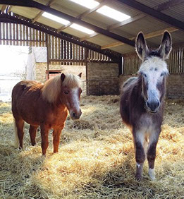 DBS - Doris with her Pal, owned by member Alison Wade in Pembrokshire