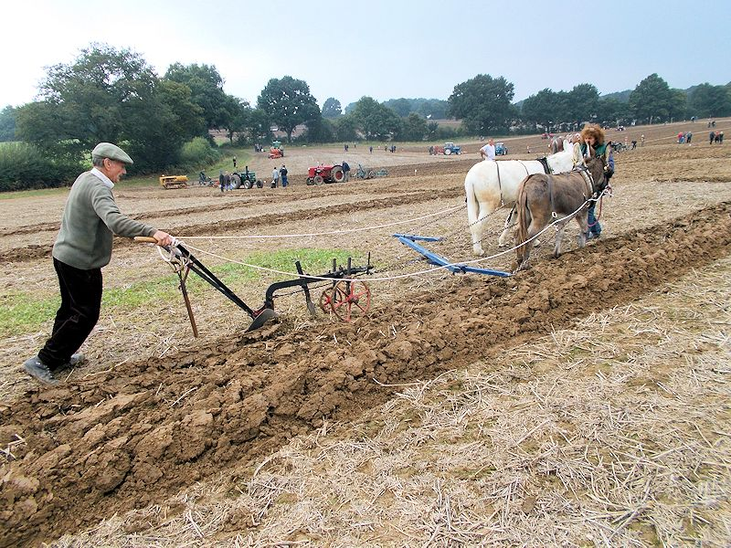 Norman Roger ploughing with his donkeys