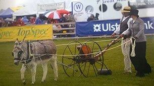 Saintfield Agricultural Show – Northern Ireland