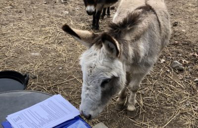 Francis Earl (FrankE) and Clare Eunice (ClarE) were very excited to receive the Donkey Breed Society Membership Packet