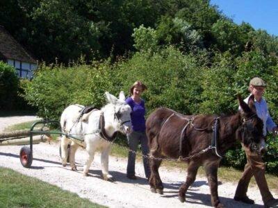 Active Donkeys are Happy Donkeys