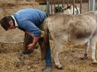 Caring for your Donkey